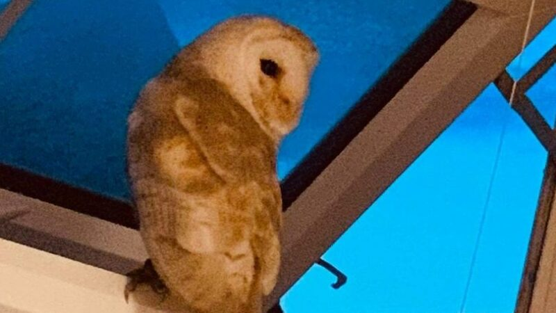 """Terrified boy, 3, wakes mum after finding """"big scary bird"""" staring at her in bed"""